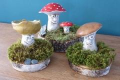 Pilze auf Baumscheiben