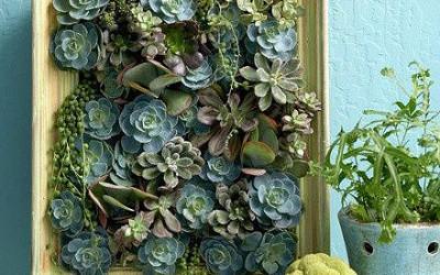Floraler Bastel-Tipp: Ein Sukkulenten-Bild